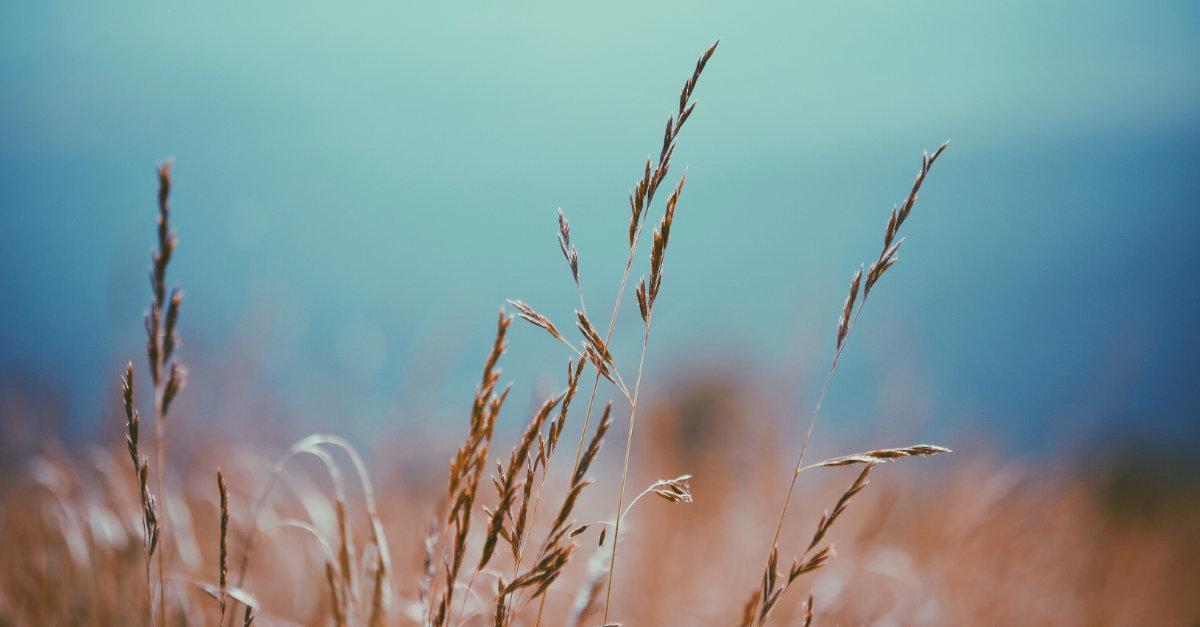 Kiitollisuus luontoa kohtaan - vilja